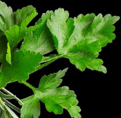 Horeca Absolute Leaf Image