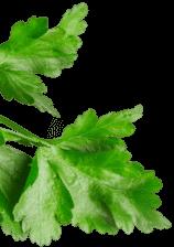 Horeca Absolute Leaf Image Mobile